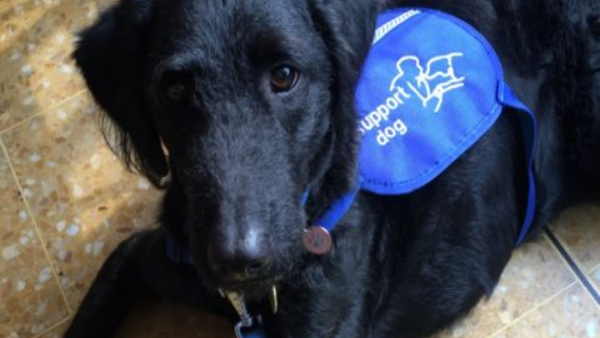 Ruby, disability assistance dog