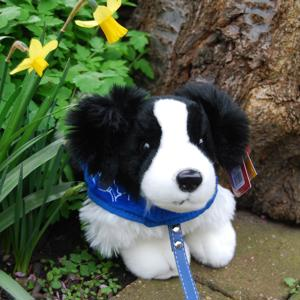 Border Collie standing support dog