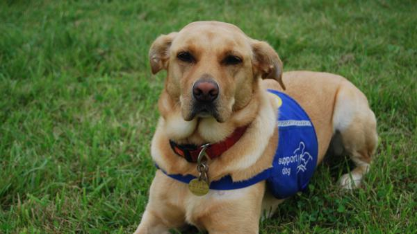 Duffy  disability assistance dog sponsor a dog