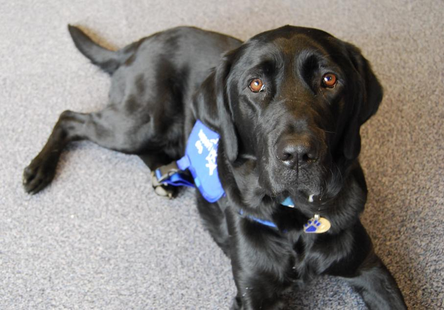 Thor, autism assistance dog