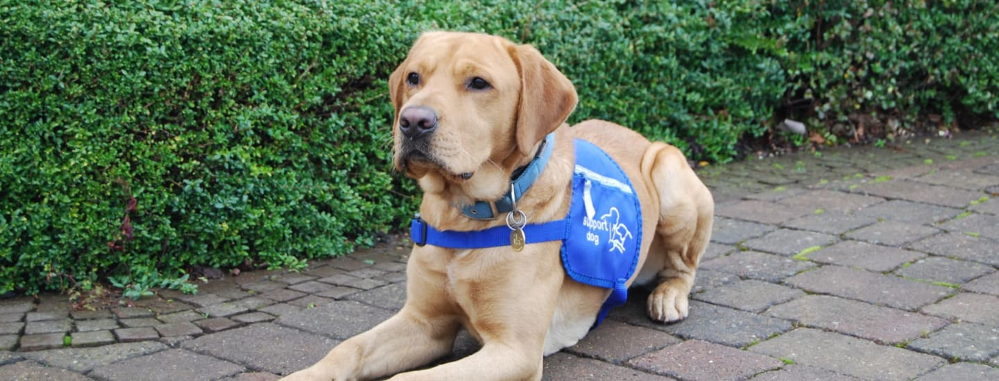 Ex-rescue dog Bear gets a second chance to be a life-changing assistance dog