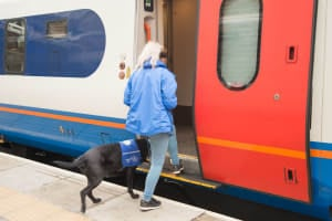 Your opportunity to tell the Government about your experiences of travelling with an assistance dog