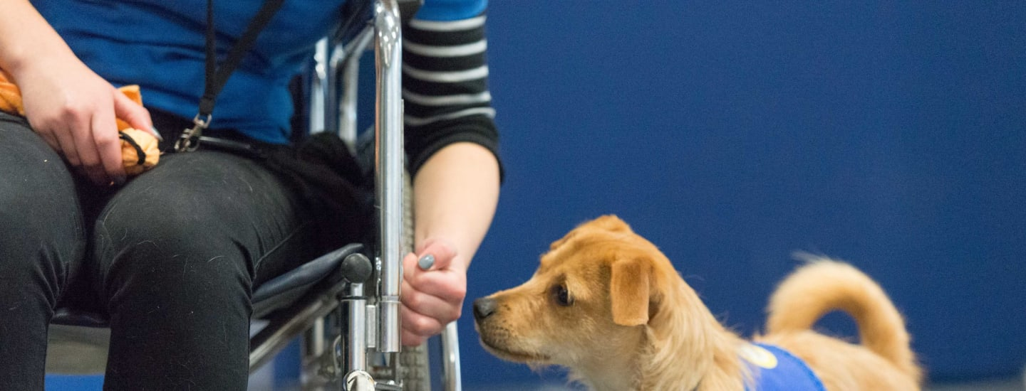 Disability assistance dog