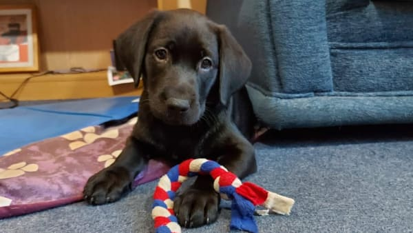 Youngster Erin scoops Support Dogs' award - for the love of puppy Ginny