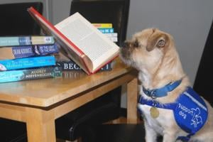 Virtual Clever Paws Quiz